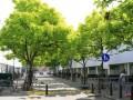 Boompje opzetten over klimaatneutrale stad