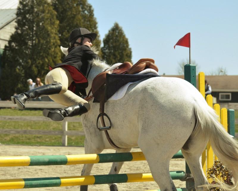 Ruiter En Paard Installatie Nl