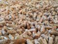 Biomassa, pellets, pelletketel